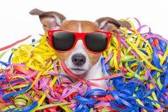 Celeberation de chien de joyeux anniversaire Photographie stock libre de droits
