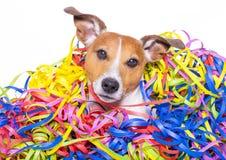 Celeberation del cane di buon compleanno Fotografie Stock Libere da Diritti