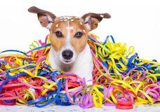 Celeberation do cão do feliz aniversario imagem de stock