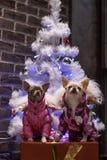 Celebração da véspera de Ano Novo sob a árvore branca imagens de stock