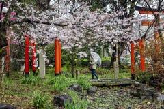 Celebración de Hanami en un parque japonés imagen de archivo libre de regalías