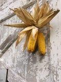 Celebración de la cosecha Imagenes de archivo