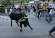 Celebración del encierro en Mallorca, España fotografía de archivo