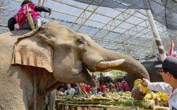 Celebran a Chiang Rae, Tailandia - 2019-03-13 - d?a del elefante con un banquete de las frutas para los elefantes que han trabaja imagen de archivo libre de regalías