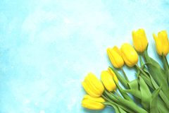 Celebrate background with bouquet of yellow tulips.Top view with. Celebrate background with bouquet of yellow tulips on a light blue slate, stone or concrete Royalty Free Stock Photo