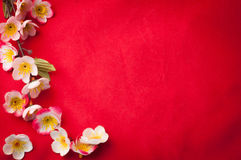 Celebrate Chinese New Year background with  beautiful blossom fr Royalty Free Stock Photography
