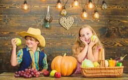 Celebrate harvest festival. Children presenting harvest vegetable wooden background. Kids girl boy fresh vegetables. Harvest rustic style. Fall harvest holiday royalty free stock photography