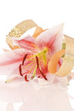 Celebrate With A Lily Stock Photography