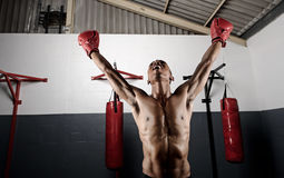 Celebrating boxer Stock Photography