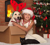 Celebrating christmas with my furry friends Stock Photography
