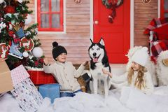 Celebrating Christmas with their dog at home. children play with dog with decorated Christmas tree in the background.
