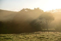 Celebrating Dawn. Sunrise over green farmland, Northland New Zealand royalty free stock images