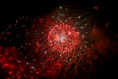 Celebrating firework in the black night sky Royalty Free Stock Images