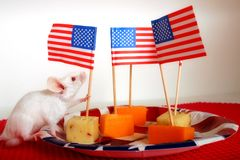 Celebrating the Fourth. Mouse on plate full of cheese bits, holding a toothpick flagpole Stock Image