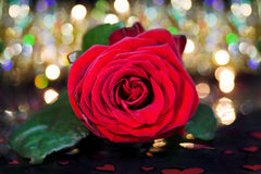 Celebrating love - red rose over fairy lights stock photo
