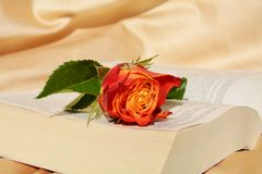 Celebrating religion. Beautiful rose on the pages of an opened Bible, suggesting the celebration of religion Stock Photography