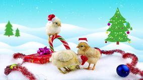 Celebration Chinese New Year of the Rooster 2017, three new born cute roosters. Near candy cane, present and Christmas tree, snowfall