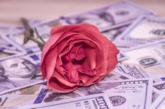 Pink rose lies on top of the dollars. stock images