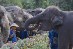 Celebration for elephant in Phuket. Phuket, Thailand - December 25, 2016 : A litle elephant in yearly celebration for elephant in Phuket Royalty Free Stock Photo