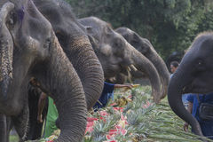 Celebration for elephant in Phuket. Phuket, Thailand - December 25, 2016 : A litle elephant in yearly celebration for elephant in Phuket Stock Photography