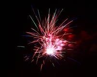 Celebration firework in the black night sky Stock Image