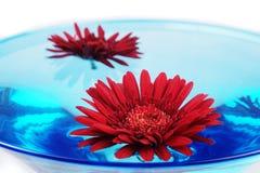 Celebration Flower in glass Stock Image