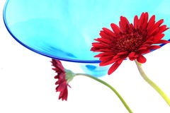 Celebration flower and glass Stock Image