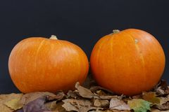 Celebration. Halloween with pumpkins great day. Оrange pumpkins and leaves are the perfect combination of autumn Royalty Free Stock Image