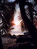 Celebration of nature. View of setting sun through a frame of coconut palm fronds stock photo