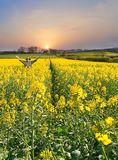 Celebration of Naure. As sun rises Man throws up his hands in joy of a fine new Day and a Healthy crop, Farm on the Hillside in background Stock Photo