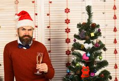 Celebration and New Year mood concept. Man with beard. And bow tie holds glass of champagne. Santa with tricky face in festive room. Guy sits next to Christmas stock image