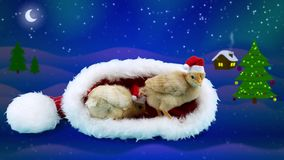 2017 Celebration winter night background, two golden small roosters. (Chinese zodiac symbol) in red Santa Claus hat stock video footage