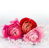 Celebratory background with roses and crystal garland Stock Images