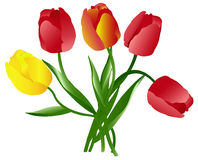 Celebratory bouquet of tulips Royalty Free Stock Photos
