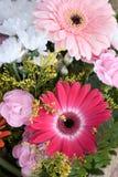 celebratory chrysanthemums för bukettkort Fotografering för Bildbyråer