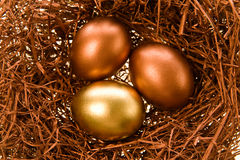 Celebratory eggs. Two chocolate eggs and one gold lay in a nest Stock Image