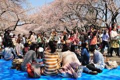 Celebrazione del fiore di ciliegia Immagine Stock Libera da Diritti