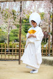 Celebrazione delle nozze tipiche nel Giappone Immagine Stock Libera da Diritti
