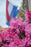 """Celebrazione tradizionale di compleanno di re dei Paesi Bassi Willem-Alexander, re \ """"festa nazionale di giorno di s il 27 aprile fotografie stock libere da diritti"""