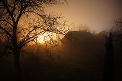 Celeiro da névoa da árvore Imagem de Stock