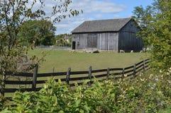 Celeiro de madeira com cerca e os carneiros de madeira no pasto fotografia de stock
