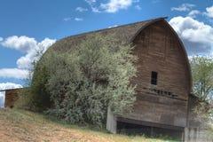 Celeiro de madeira dilapidado abandonado em um monte em Washington fotos de stock