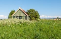 Celeiro de madeira velho coberto de vegetação com as ervas daninhas Foto de Stock