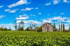 Celeiro de Vntage Foto de Stock