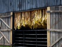 Celeiro do tabaco fotos de stock