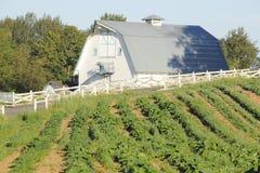 Celeiro e campo de milho fotografia de stock royalty free