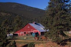 Celeiro e cavalos vermelhos do país de Colorado Fotografia de Stock Royalty Free