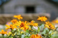 Celeiro e flores fotografia de stock