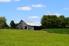 Celeiro em um campo de milho com céus azuis Fotografia de Stock Royalty Free