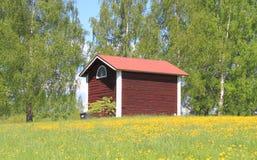 Celeiro finlandês velho no prado do dente-de-leão fotos de stock